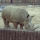 내가!코뿔소